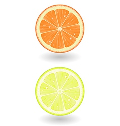 Lemon and orange slice vector