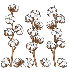 Set of color with cotton branches vector