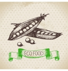 Hand drawn sketch peas vegetable Eco food vector image