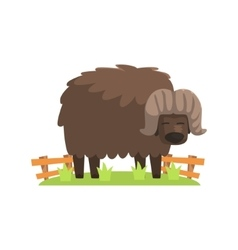 Musk ox with scruffy brown coat standing on green vector