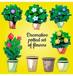 Set of decorative plants flowers and empty pots vector