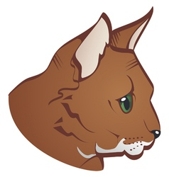 Cats face vector image
