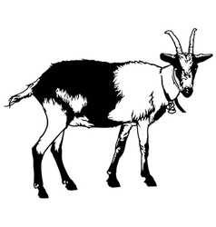Goat from side view vector