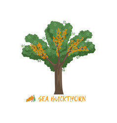 sea buckthorn berry bush with name vector image