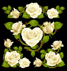 White rose design elements vector