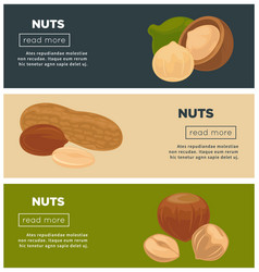 Healthy nutritious nuts promotional internet pages vector