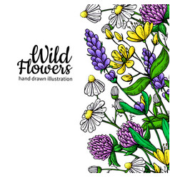 Wild flowers drawing set isolated meadow vector