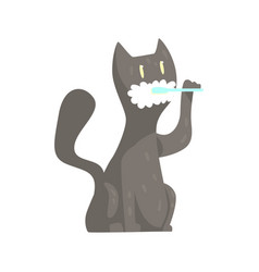 Cute cartoon grey cat brushing teeth with tooth vector