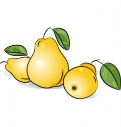 yellow pears vector image vector image