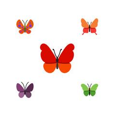 Flat monarch set of milkweed violet wing moth vector