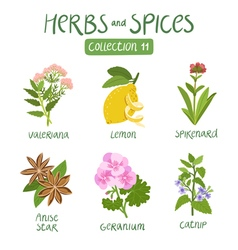 Herbs and spices collection 11 vector