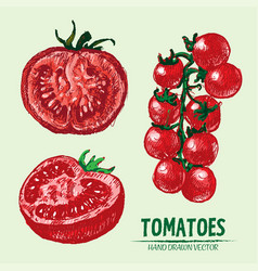 Digital detailed tomato hand drawn vector