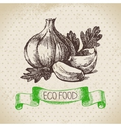 Hand drawn sketch garlic vegetable eco food vector