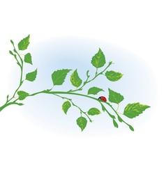 Branch of birch and ladybird vector