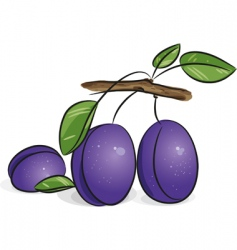 violet plums vector image vector image