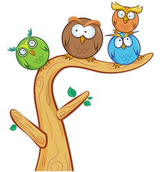 funny owl group cartoon on tree vector image