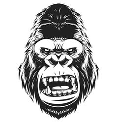 fierce gorilla head vector image vector image