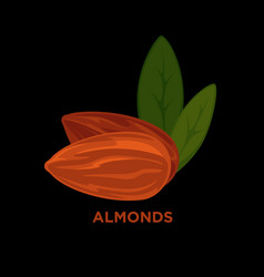 almond nut cartoon vector image