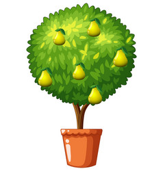 Potted plant with pear fruits vector