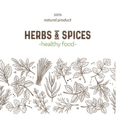 Seamless border herbs and spices vector