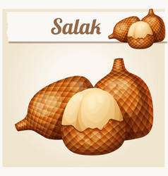 salak fruit cartoon icon vector image