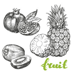 fruit pomegranate kiwi pineapple set hand drawn vector image