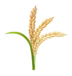 Rice ear realistic vector