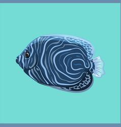 Surgeonfish vector