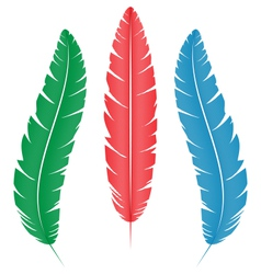 Multicolored feathers on white vector
