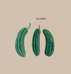 Cucumber sketch vector