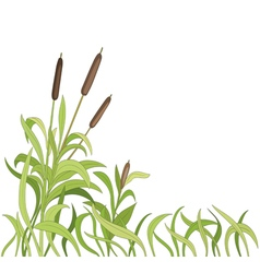 cartoon reeds background vector image vector image