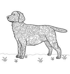 Dog labrador antistress coloring book vector