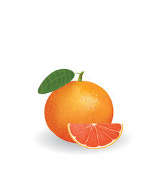 grapefruit whole and a half vector image