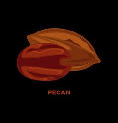pecan nut vector image