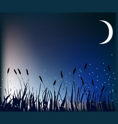 Meadow at night vector