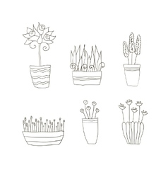 pot plants with flowers and leaves vector image