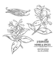 Vanilla set vector