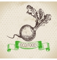 Hand drawn sketch turnip vegetable eco food vector