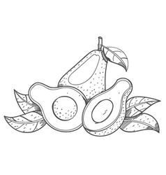 avocado fruit logo halves of avocado leaves vector image vector image