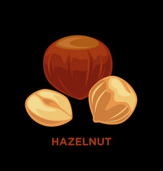 set of detailed cartoon hazelnuts isolated vector image
