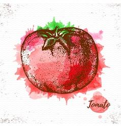 Watercolor tomato sketch vector image