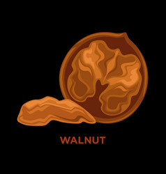 walnuts isolated composition vector image