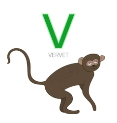 Alphabet letter v vervet children vector