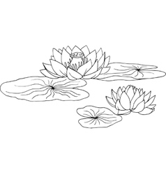 Lotus water lily vector