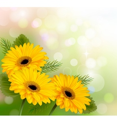 Nature background with yellow beautiful flowers vector image