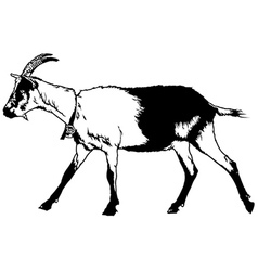 Goat from profile view vector
