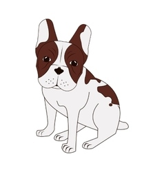 French bulldog icon vector