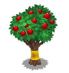 Green tree with red fruits and gold holder vector image