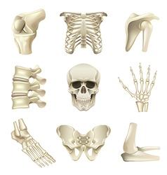 Human bones icons set vector