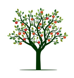 color tree with leaves and apples vector image vector image